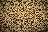 leopard skin background texture, real fur retro design, close-up wild animail hair modern beauty in nature