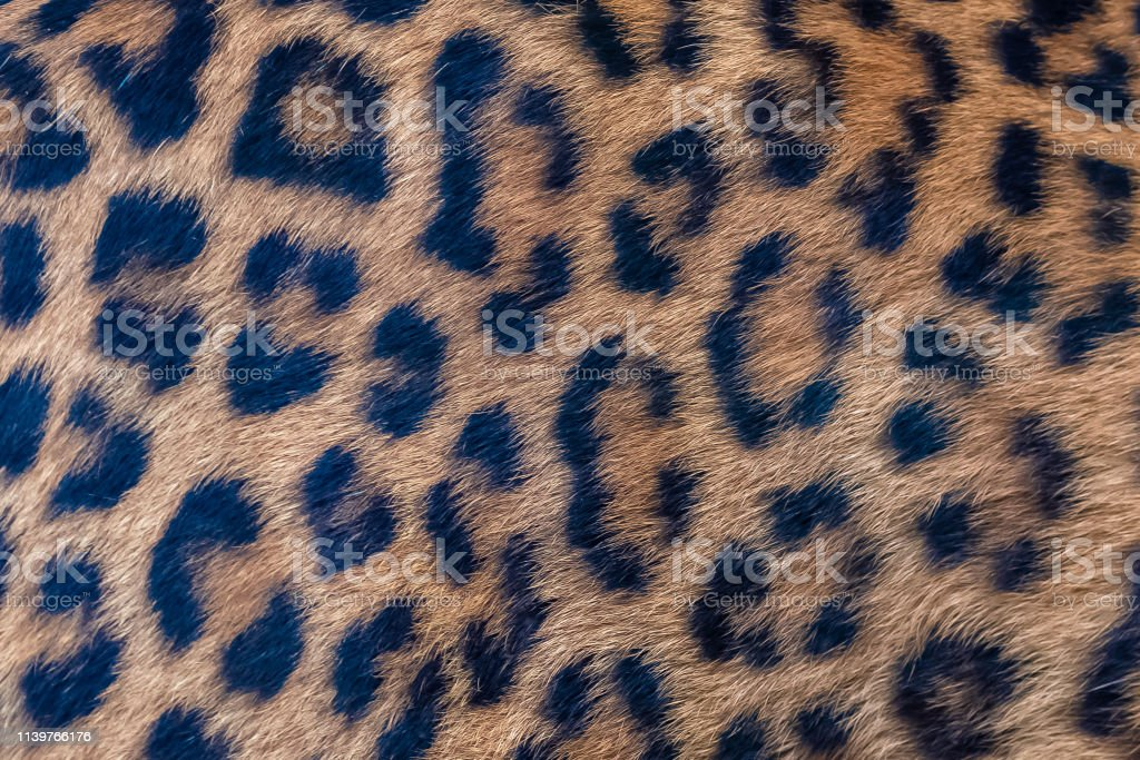 Leopard, skin stock photo