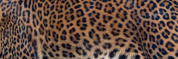Leopard skin picture id1139766198?b=1&k=6&m=1139766198&s=612x612&w=0&h=juad6kjxnwbnrjdehdq6gjfn6bfbga2sobhbyevrv60=