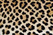 istock Leopard skin - real fur pattern 1138824157