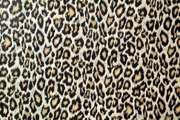 texture de peau de léopard (cliquez pour en savoir plus) - panthere noir photos et images de collection