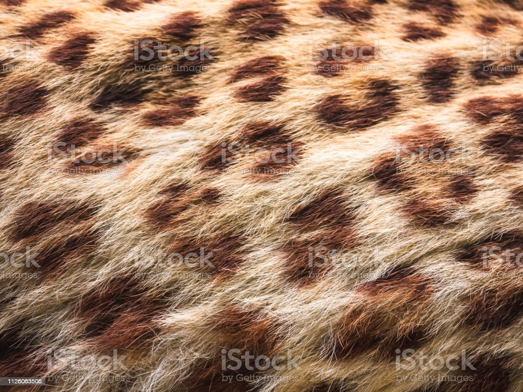 Leopard texture skin tiger Pattern Animal Nature Background close up