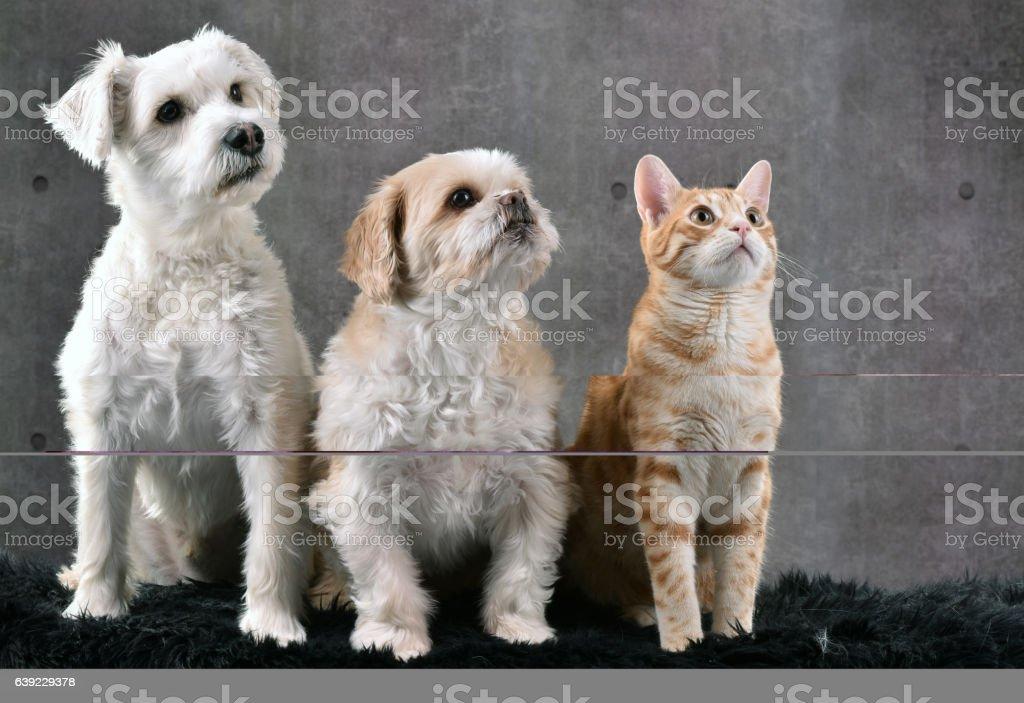 Les trois amis stock photo