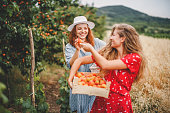 Lesbian couple harvesting peach in nature