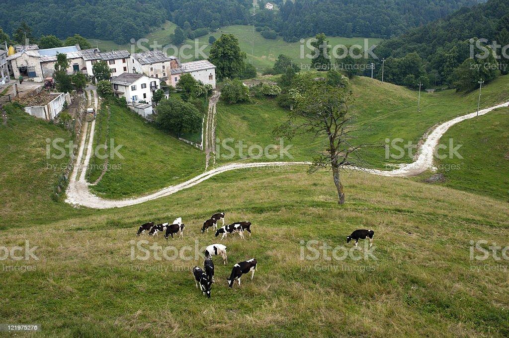 Lessinia (Verona, Veneto, italy), landscape: village and cows at pasture royalty-free stock photo