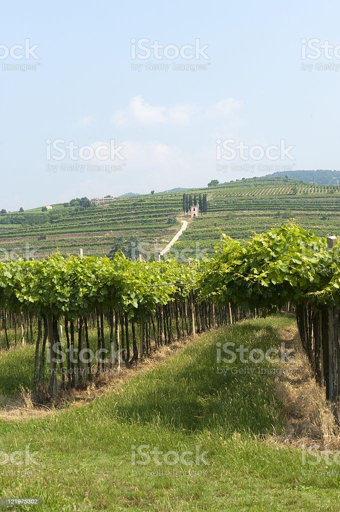 Lessinia (Verona, Veneto, italy), vineyards near Soave at summer royalty-free stock photo