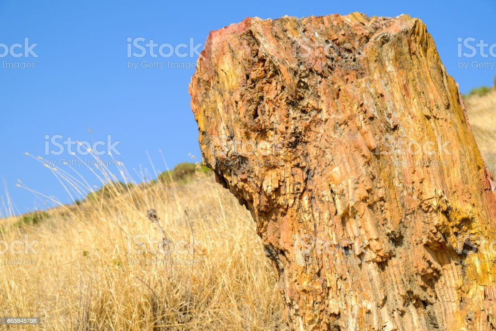 Lesvos Petrified Forest stock photo
