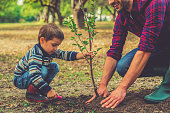 Little boy helping his father to plant the tree while working together in the garden