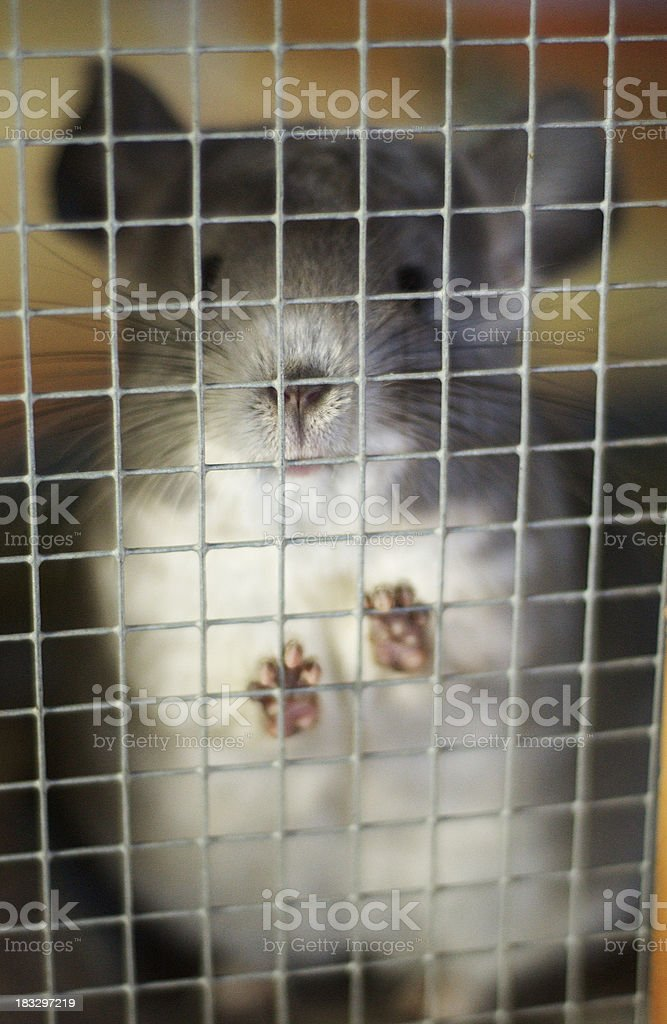 Let me outta here! royalty-free stock photo