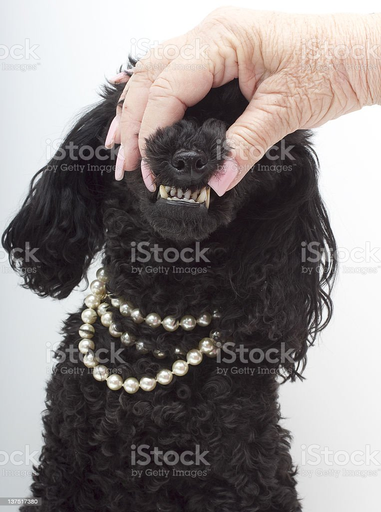 Let Me See Those Buck Teeth! stock photo