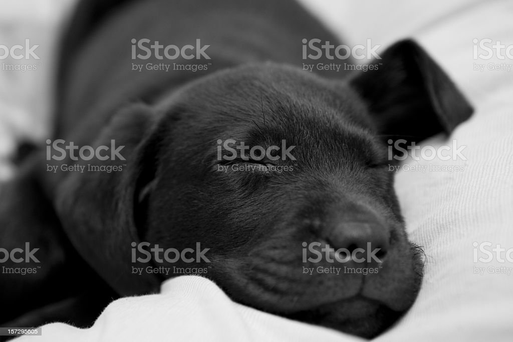 Let sleeping dogs lie royalty-free stock photo