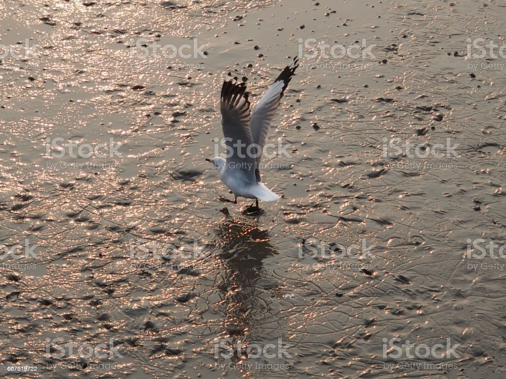 Let walk slowly, the bird is saying. stock photo