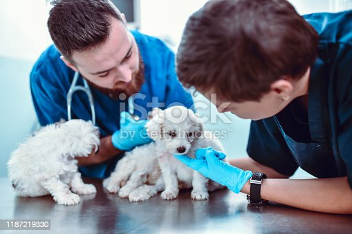 istock Let's Check These Pups For Fleas 1187219330