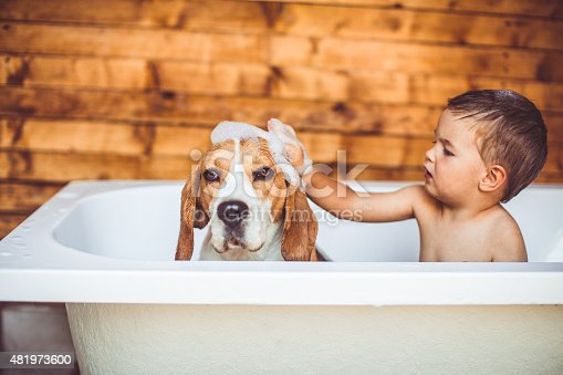 Little boy is giving a bath to his beagle dog, while they are in a bathtub together