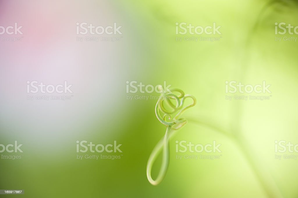 Lets Do The Twist royalty-free stock photo