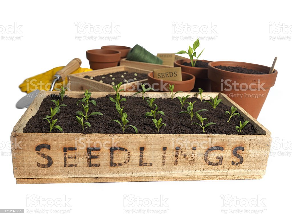 lets Plant royalty-free stock photo