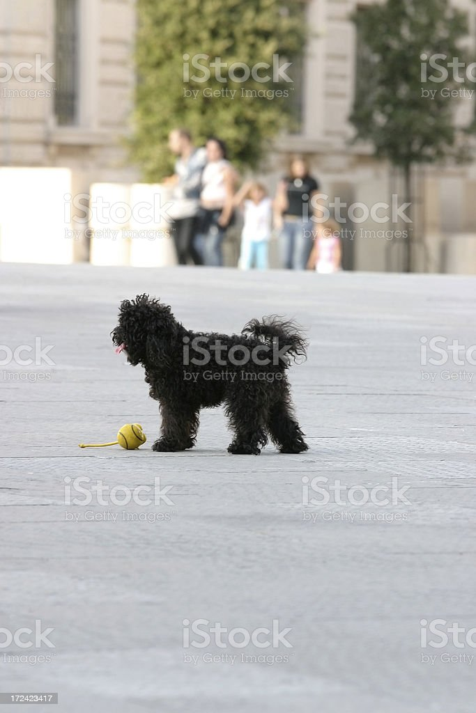 Lets Play! royalty-free stock photo