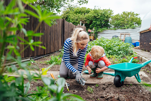 A shot of a young toddler boy and his pregnant mother in a community garden. They are wearing casual clothing and are kneeling and looking at something in the soil.