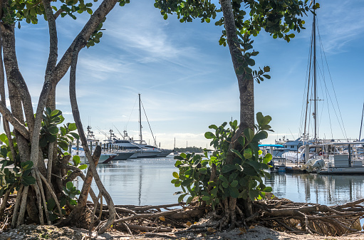 Coconut Grove, FL, USA - January 29, 2021: View of the luxury boats of Grove Harbor Marine, in Coconut Grove, Miami on a beautiful morning.
