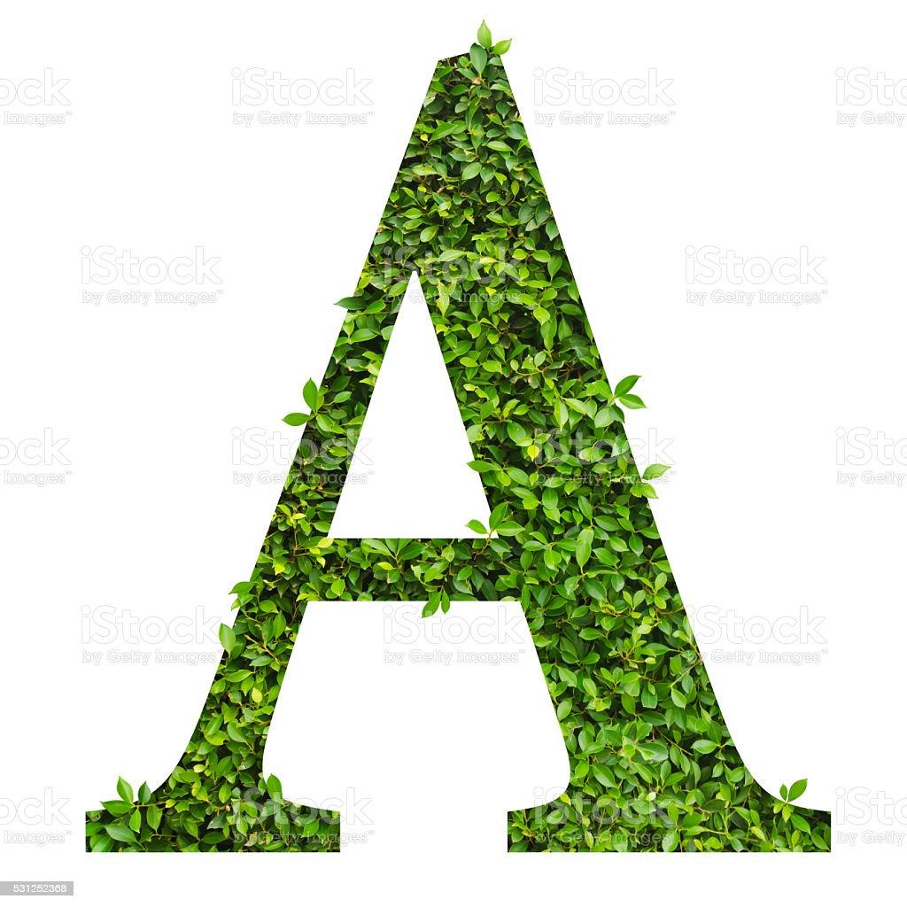Fotografía De Letra A Letra Del Alfabeto De Hojas Verdes Y Más Banco