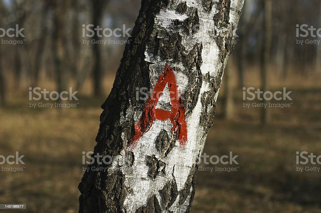 Letter A on tree royalty-free stock photo