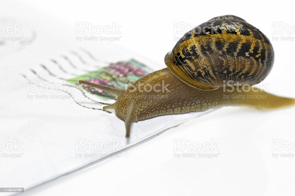 Letter and snail royalty-free stock photo