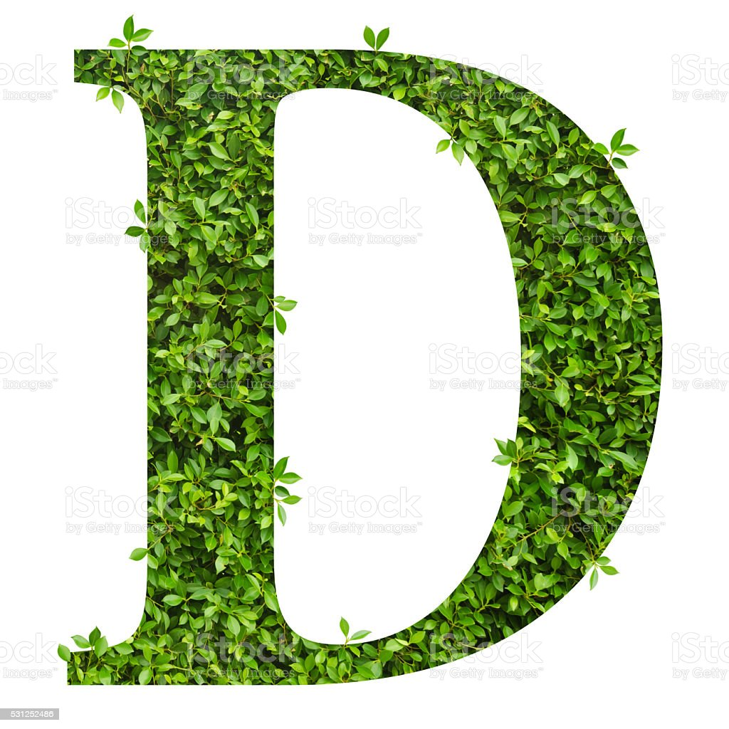 Letter D Alphabet Of Green Leaves Stock Photo & More ...