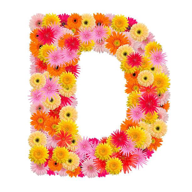 buchstabe d alphabet mit gerbera isoliert auf weißem hintergrund - schöne englische wörter stock-fotos und bilder