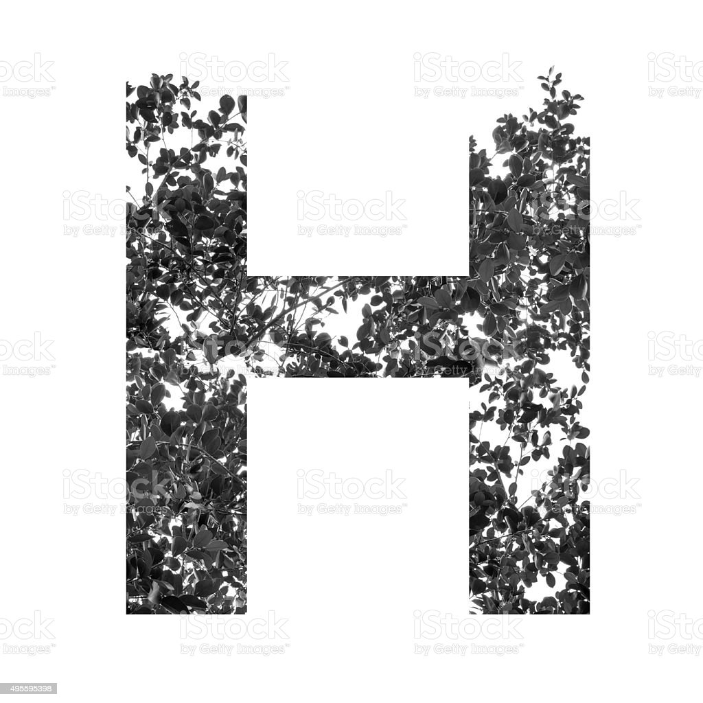 H letter double exposure with black and white leaves stock photo