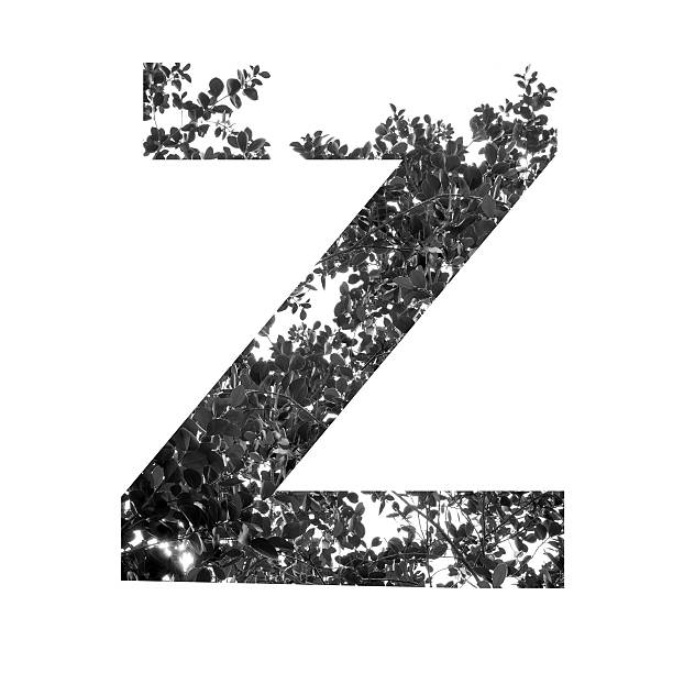 Z letter double exposure with black and white leaves stock photo