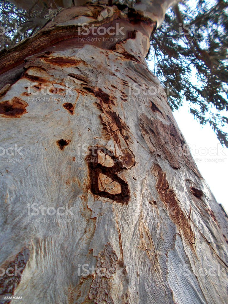 B letter engraved on a tree stock photo