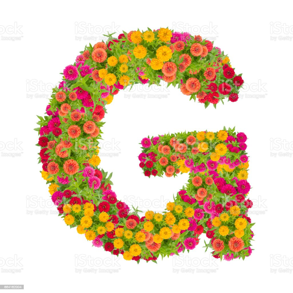 Letter G alphabet made from zinnia flower royalty-free stock photo