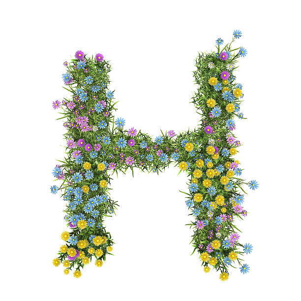 dc66221057 Best Letter H Of Flowers Stock Photos, Pictures & Royalty-Free ...
