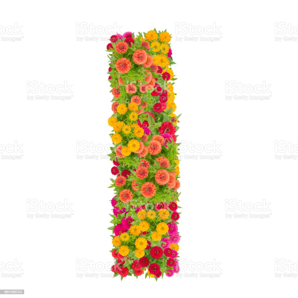 Letter I alphabet made from zinnia flower royalty-free stock photo