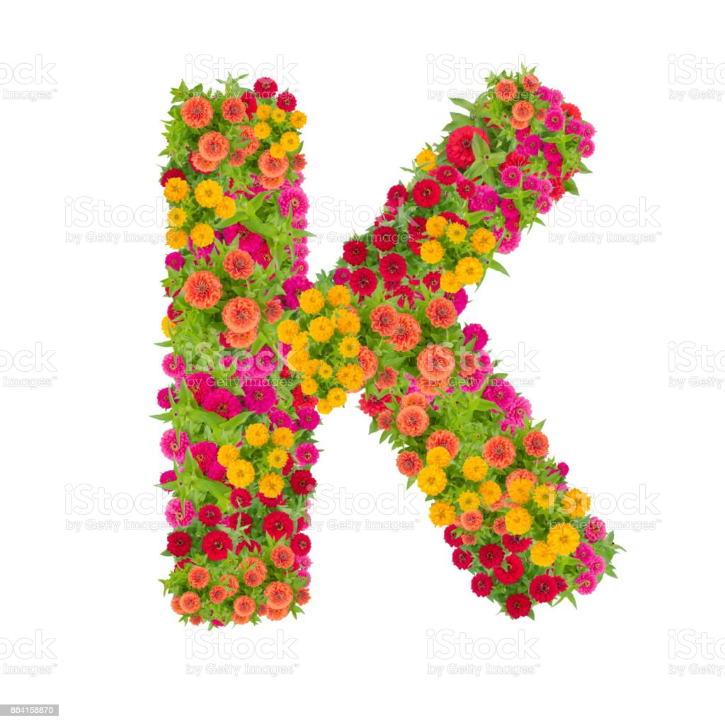 Letter K alphabet made from zinnia flower royalty-free stock photo
