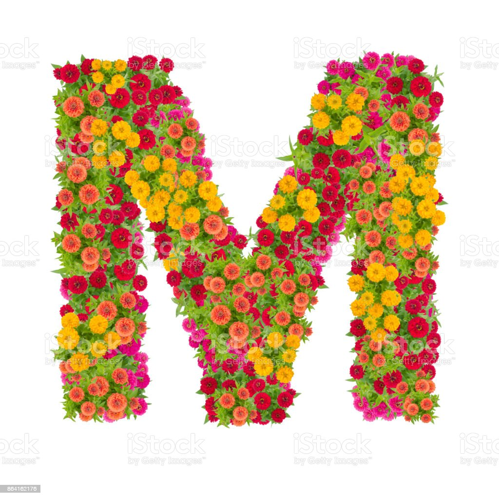 Letter M alphabet made from zinnia flower royalty-free stock photo