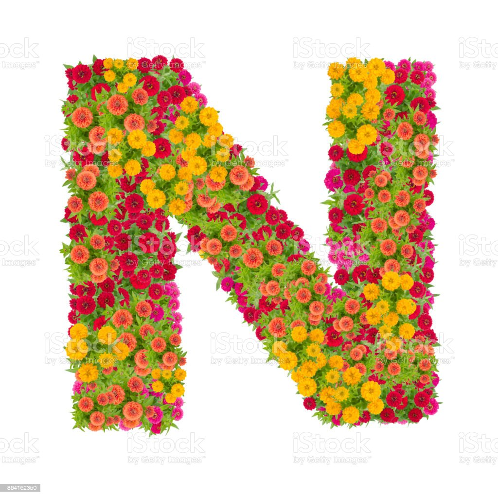 Letter N alphabet made from zinnia flower royalty-free stock photo