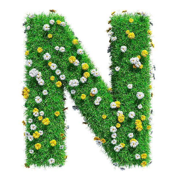 Letter N Of Green Grass And Flowers – Foto