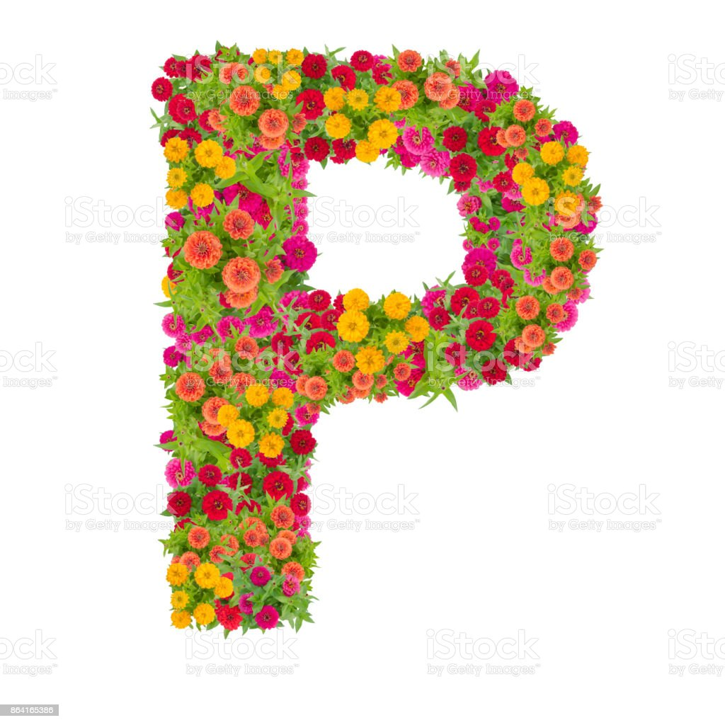 Letter P alphabet made from zinnia flower royalty-free stock photo
