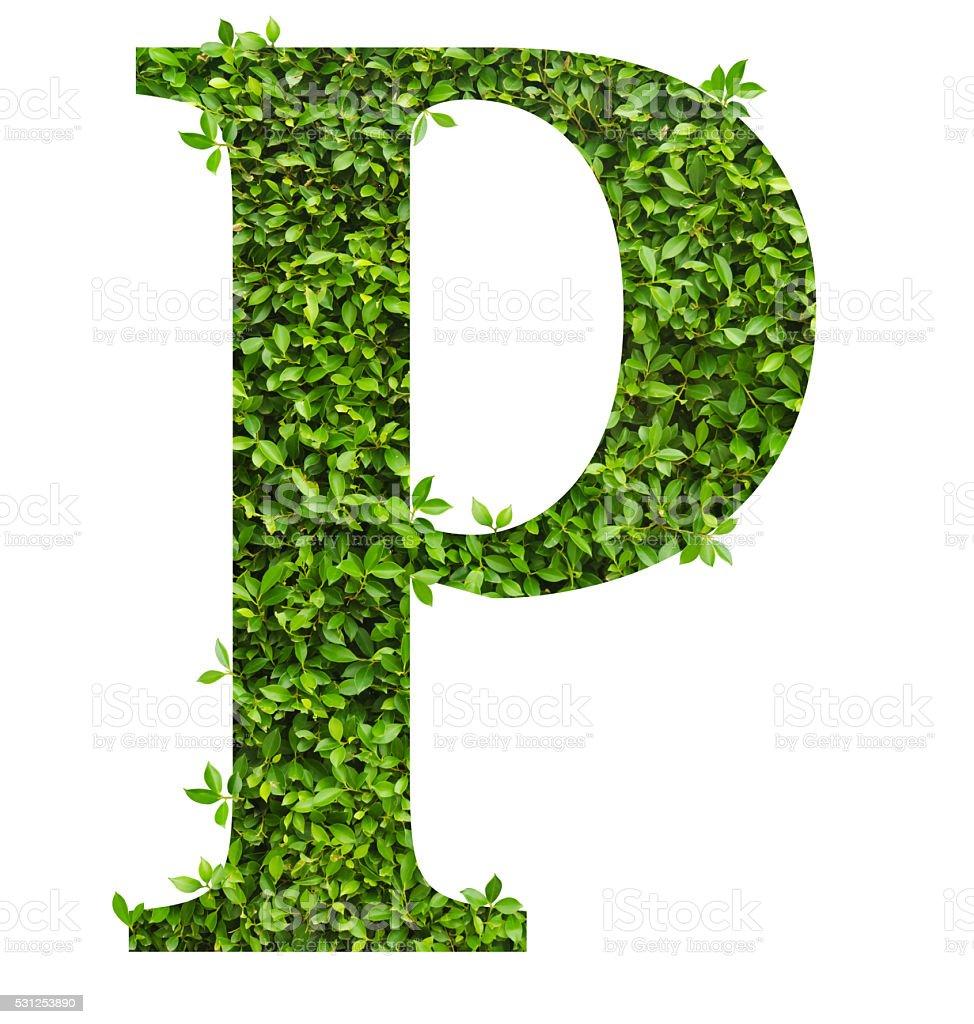 Letter P , alphabet of green leaves stock photo