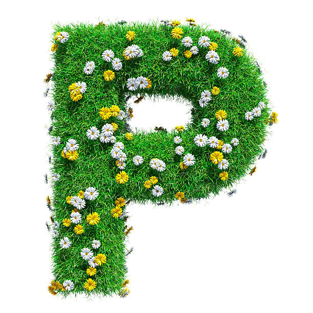 Letter P Of Green Grass And Flowers Letter P Of Green Grass And Flowers. Isolated On White Background. Font For Your Design. 3D Illustration letter p stock pictures, royalty-free photos & images
