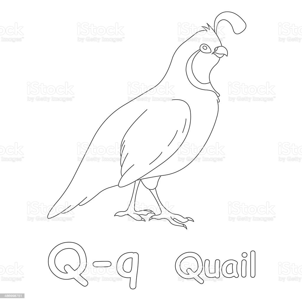 Letter Q For Quail Coloring Page stock photo 486998751 | iStock