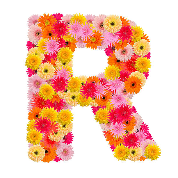 Royalty free letter r text flower alphabet pictures images and letter r alphabet with gerbera isolated on white background stock photo altavistaventures Choice Image