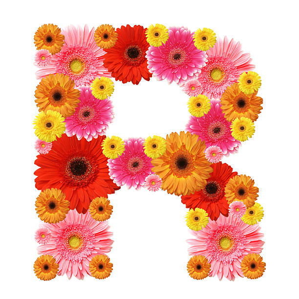 Royalty free letter r alphabet flower gerbera daisy pictures images letter r made of colorful flowers stock photo altavistaventures Choice Image