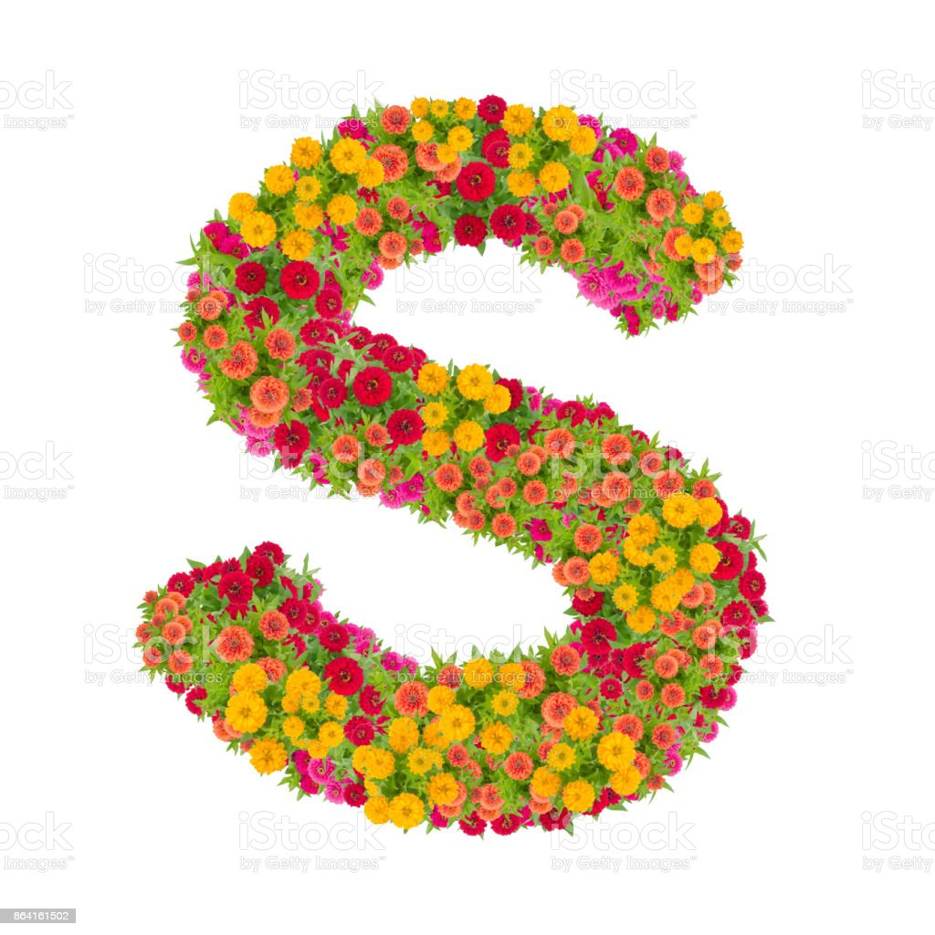 Letter S alphabet made from zinnia flowerclipping path royalty-free stock photo