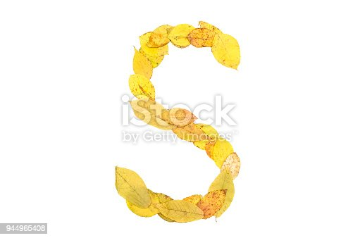 istock Letter S made of autumn fallen leaves isolated on white. 944965408