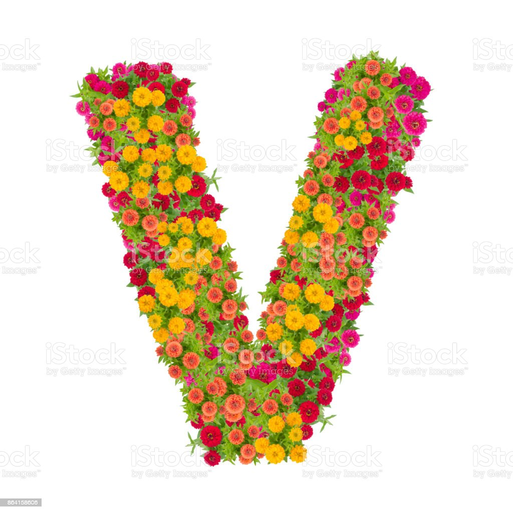 Letter v alphabet made from zinnia flower abc concept type as letter v alphabet made from zinnia flower abc concept type as logotypography design with altavistaventures Images