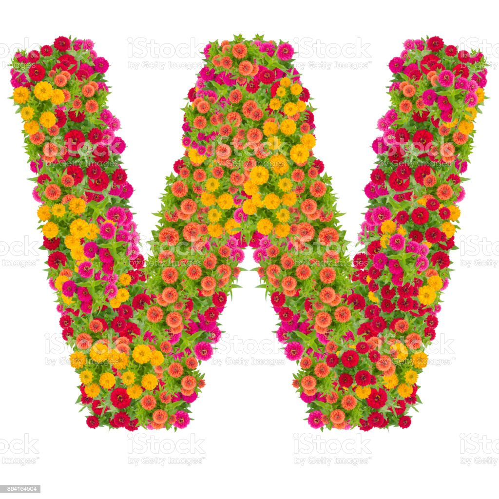Letter W alphabet made from zinnia flower ABC concept type as logo.Typography design with clipping path royalty-free stock photo
