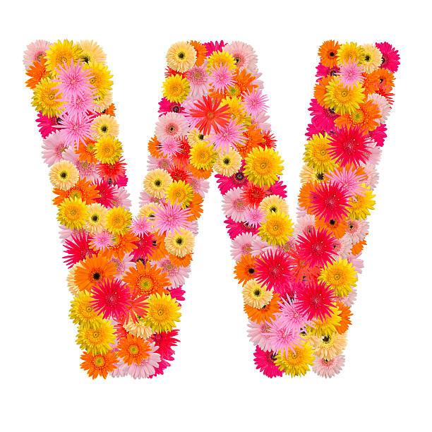buchstabe w alphabet mit gerbera isoliert auf weißem hintergrund - schöne englische wörter stock-fotos und bilder