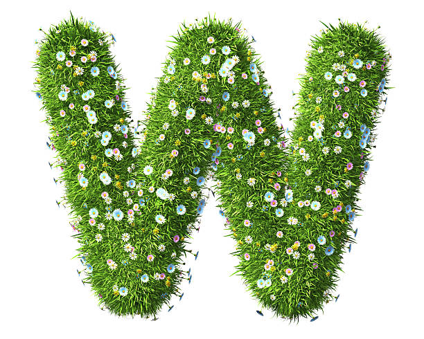 Letter W Of Grass And Flowers Isolated on the white background. 3D Render letter w stock pictures, royalty-free photos & images